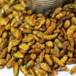 芋虫を食べる文化がある国!?いったいどこ!?