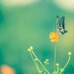 ナミアゲハの幼虫が孵化するまでの日数や時期は!?