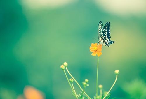 幼虫 ナミアゲハ 羽化 日数