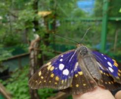 幼虫オオムラサキ 羽化 時間